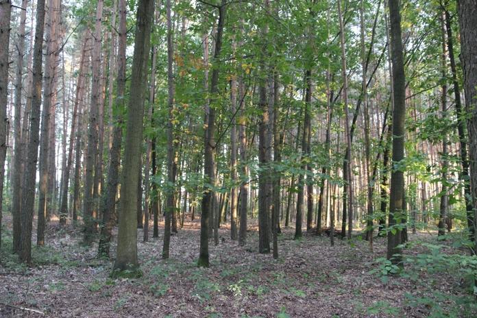Z lesa 1