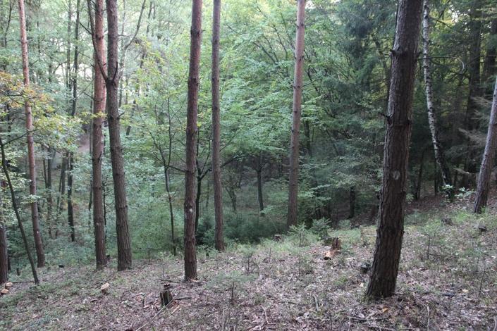 Z lesa 10