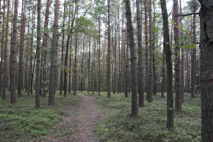 Z lesa 11