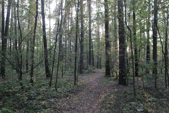 Z lesa 2