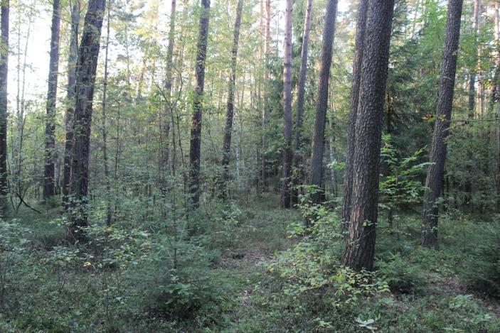Z lesa 3