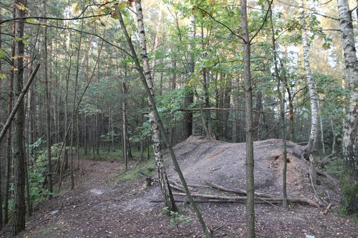 Z lesa 4