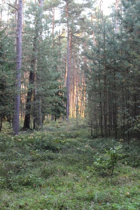 Z lesa 5