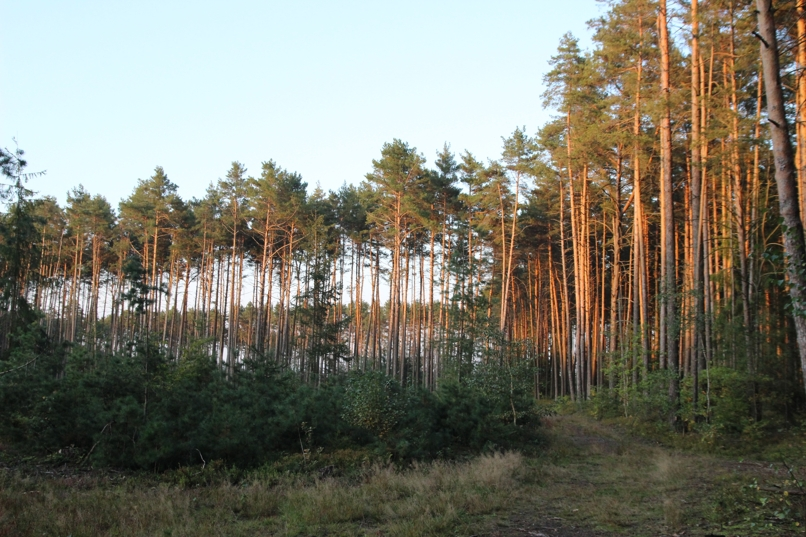 Z lesa 6
