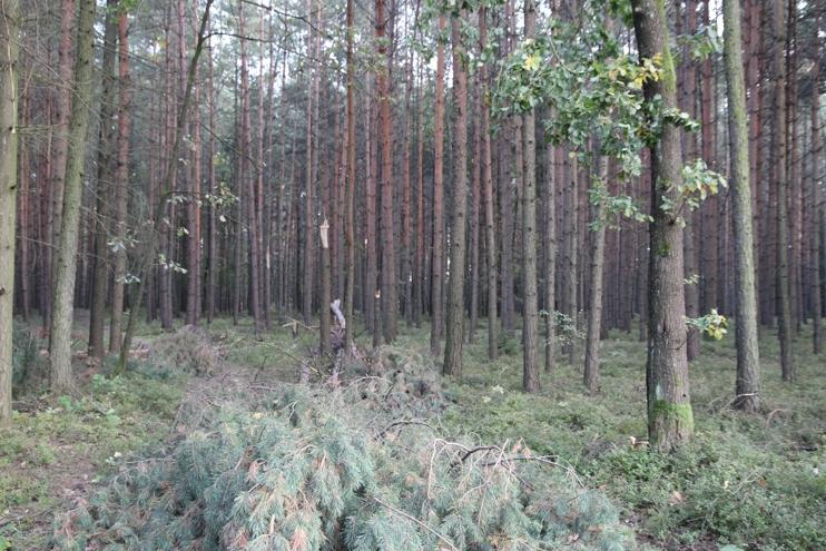 Z lesa 7