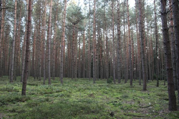 Z lesa 8