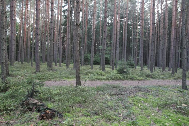 Z lesa 9